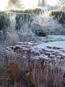 Staudenbeet im Winter